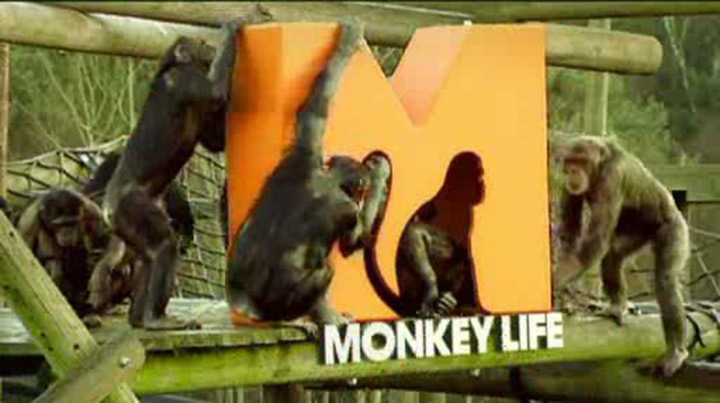 monkey-life-five-animal-planet-athena-films